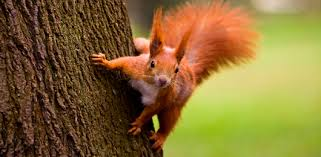 ecureuil-camping de kergo - camping nature morbihan